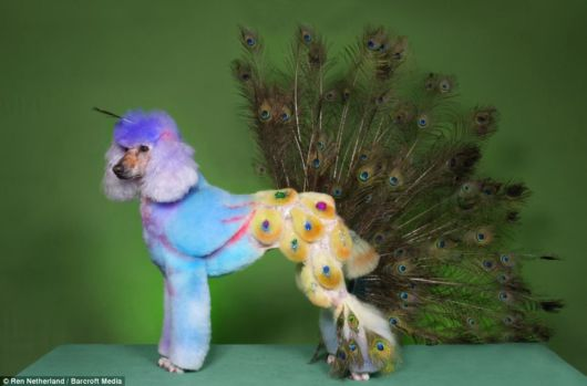 Crazy Costumes for Your Dog