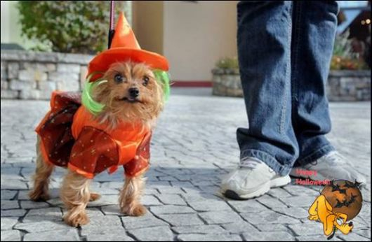 Cute Halloween Doggy Parade