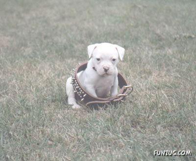 Why God Made Pets