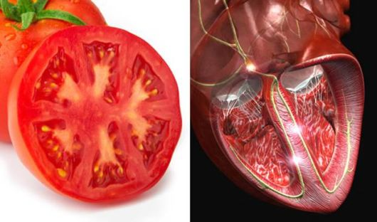 Helpful Foods That Look Like Body Parts