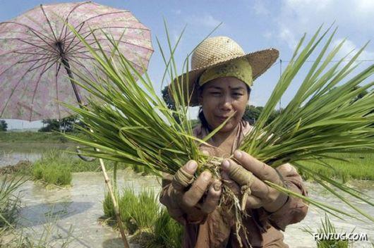 Farmers Around the World