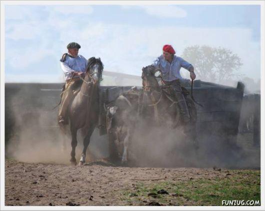 Amazing Argentine Horses Sports