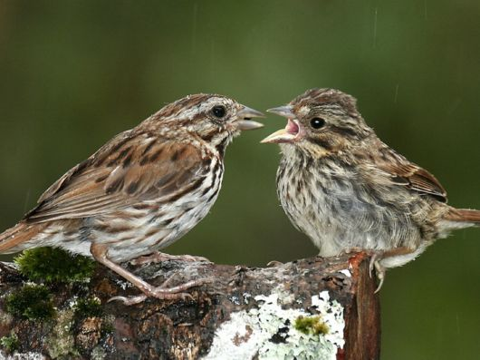Cute Interactions of Nature