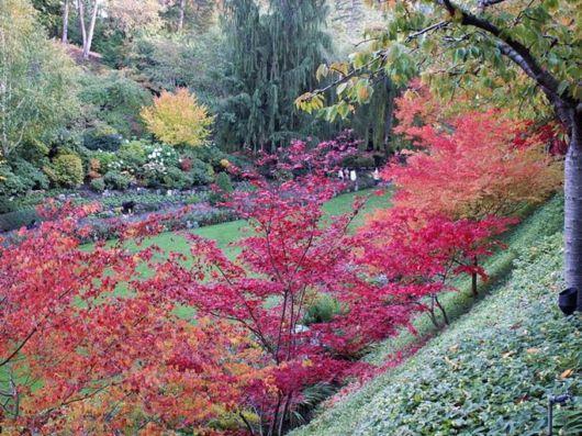 Autumn Colours at Butchart Gardens