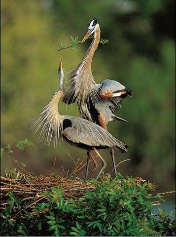 Nature Best Photo Awards