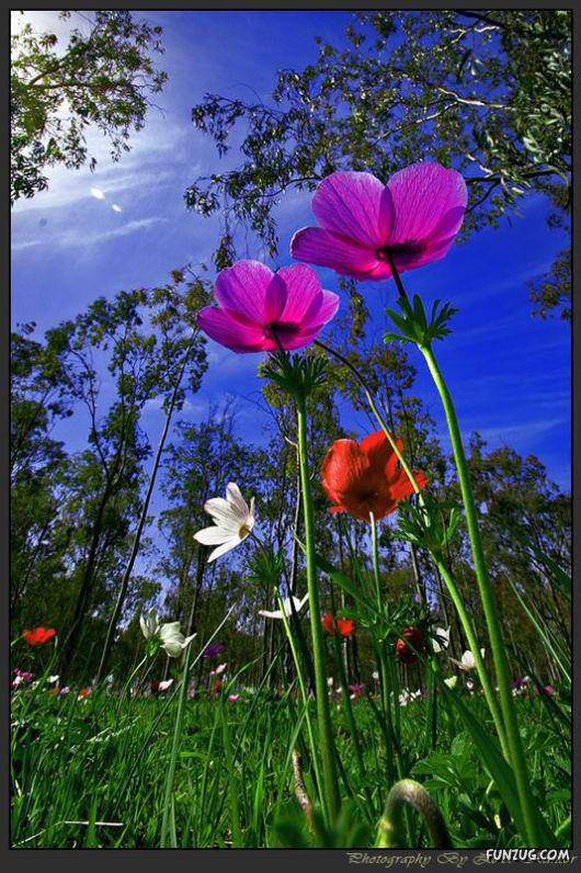 Colourful Bom Dia Flower