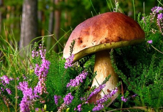 Rare and Beautiful Mushrooms