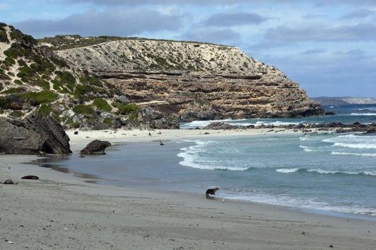 The Kangaroo Island, Australia