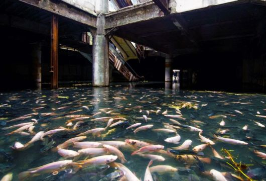 Abandoned Shopping Mall Taken Over By Fish