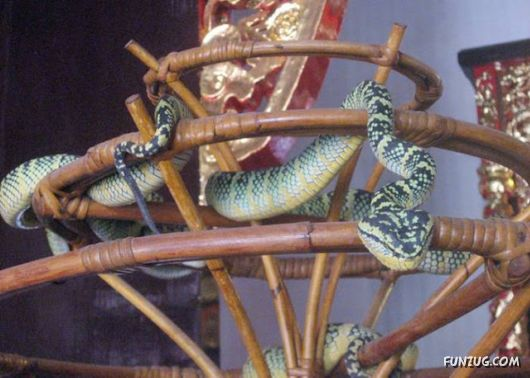 Amazing Snake Temple In Malaysia