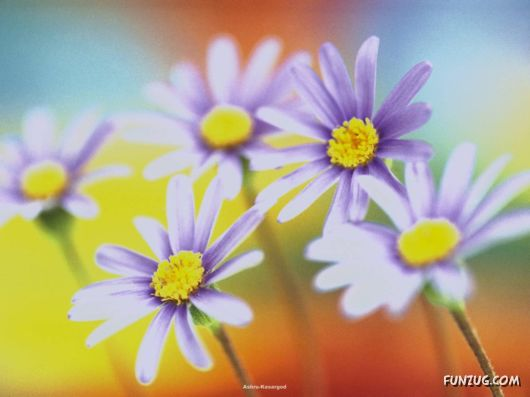 Click to Enlarge - Beautiful Colorful Flowers Wallpapers