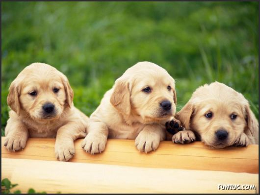 Click to Enlarge - Cutest Pets Photography Wallpapers