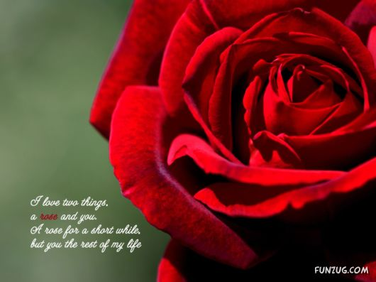 Click to Enlarge - Lovely Love Quotes Wallpapers