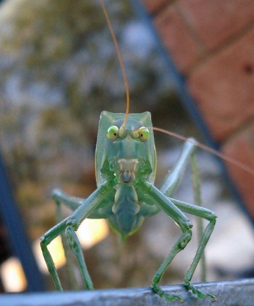 10 Most Alien-Like Insects on Earth