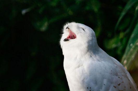 Hilarious Photos Of Amused Owls