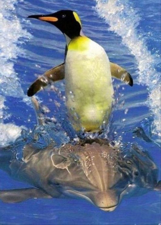 Animals Being Totally Awesome