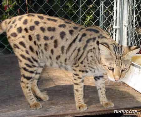 10 Awesome Hybrid Animals