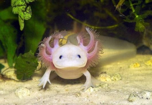 Beautiful And Unusual Endangered Animals