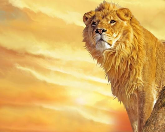 This Is King of the Jungle