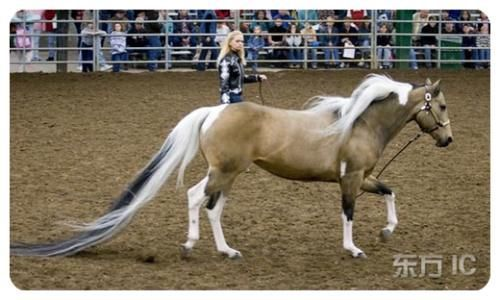A Horse with a Longest Tail