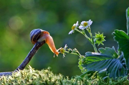 A Magical World of Snails