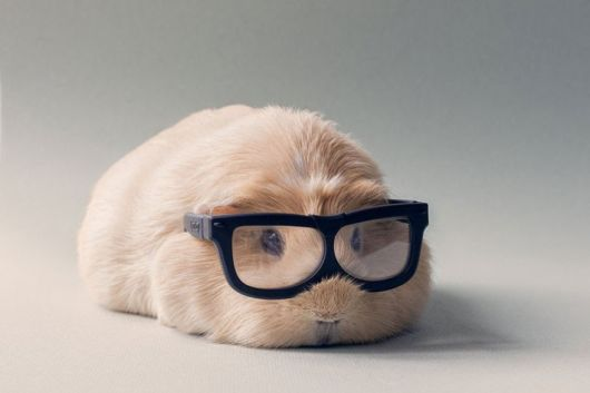 The Most Adorable Rabbits On The Internet