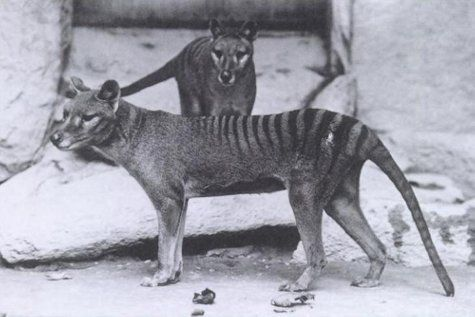 11 Recently Extinct Animals Pictures